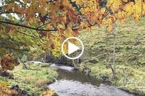 Die letzten Herbsttage beim Höflehner