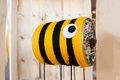 So wichtig sind Bienen für unsere Umwelt