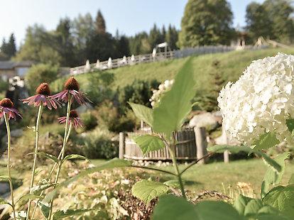 Höflehner Blog - Wanderungen im Frühling