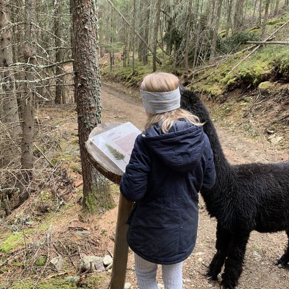 beim Alpakawandern