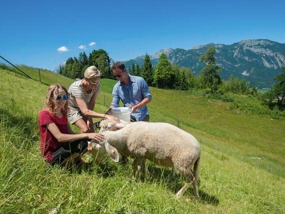 Familie mit Schafe