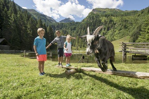 Kinder mit Ziege