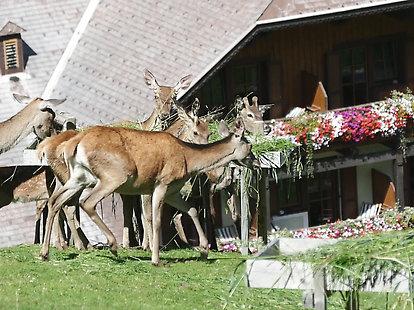 Naturhotel Rotwildgehege