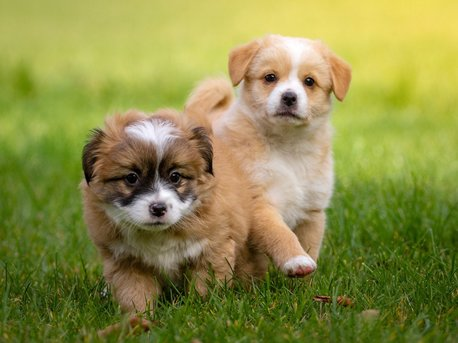 Hunde ♥lich Willkommen!
